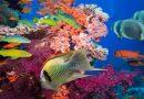 Unesco estudiará riesgos de las especies marinas por el calentamiento / UNESCO 'eDNA' initiative to 'unlock' knowledge for biodiversity protection
