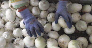 Cebollas mexicanas vinculadas a brote de salmonela en varios estados / Mexican Onions Linked to Multi-State Salmonella Outbreak